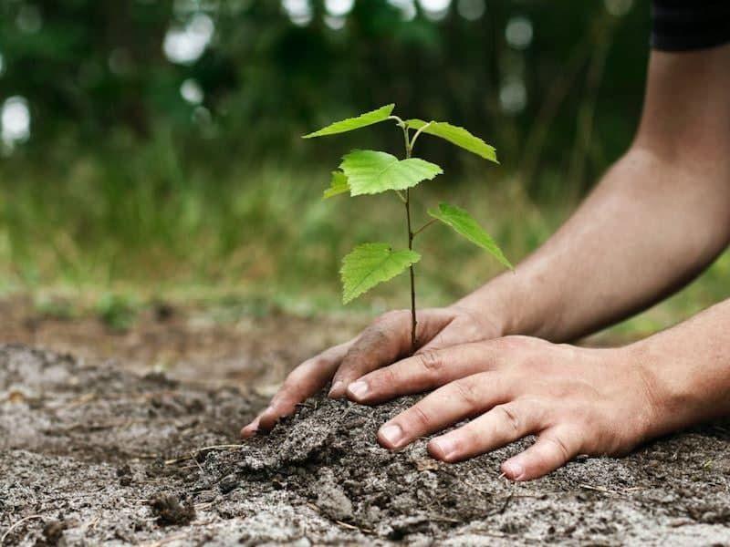 طرح نهضت درختکاری در منطقه۲ آغاز شد / استقرار ۱۳ پایگاه توزیع نهال در منطقه۲